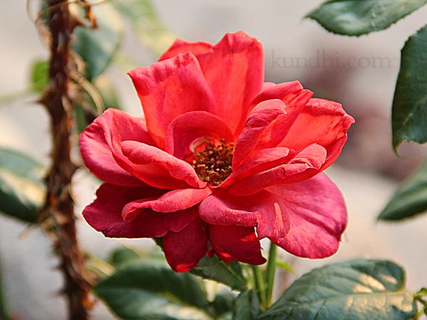 flower portrait new camera